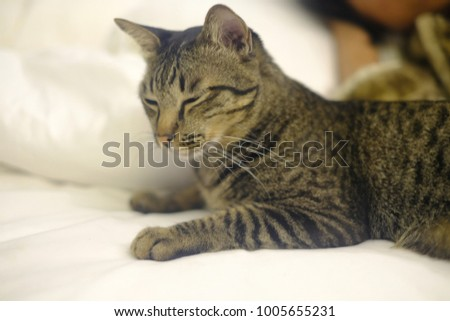 Cute cat on the bed just woke up
