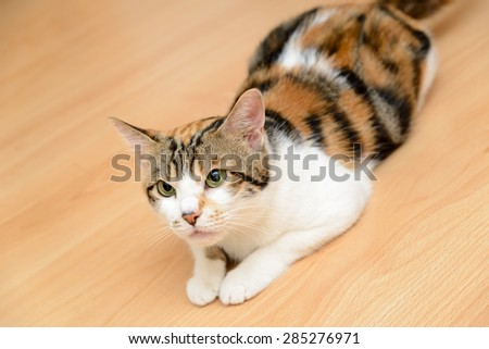 Cute cat on wooden floor