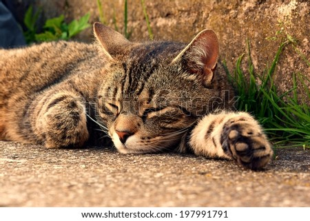 Cute cat relaxes  - stock photo