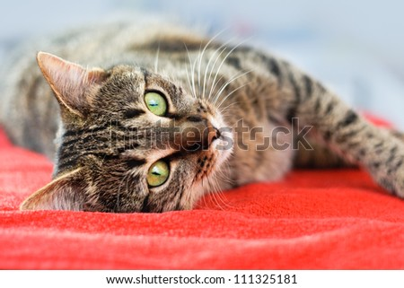 Cute cat relaxes and dreams on a bed - stock photo