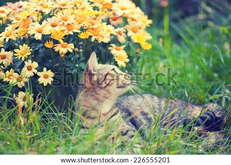 Cute cat relaxing outdoor on flower lawn