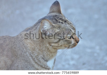Cute cat sitting in the sun in the morning. Gray striped cat walks around the house. Looking for friends and food
