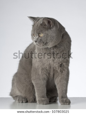 Cute cat sitting on a white background.