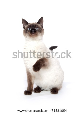 Cute cat sitting on a white background