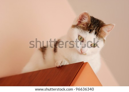 Cute cat sitting on the cupboard under the ceiling and looking down - stock photo