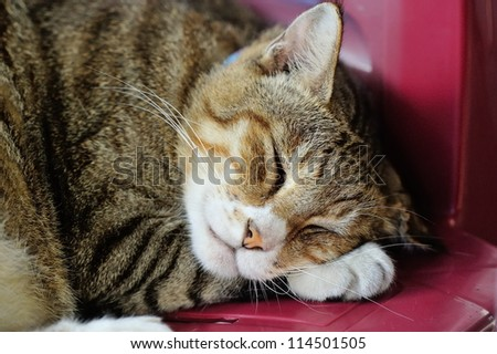Cute cat Sleeping on a chair - stock photo