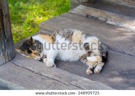 Cute cat sleeping on the porch