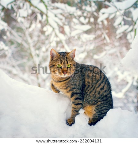 Cute cat walking in the snowy forest - stock photo