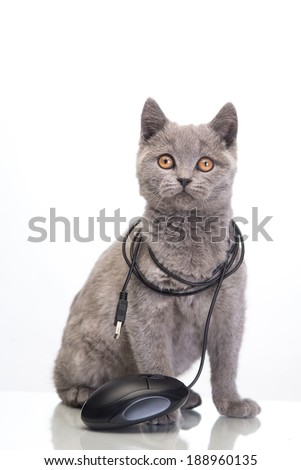 cute cat with a computer mouse - stock photo
