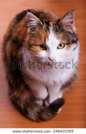 cute cat with orange fur close up looking to the camera - stock photo