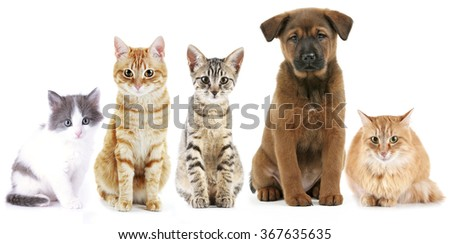 Cute cats and dog, isolated on white