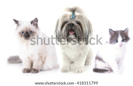 Cute cats and dog, isolated on white - stock photo