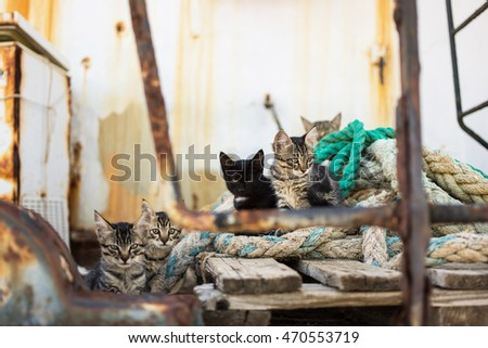 Cute Cats on Old Wooden Pallet and Worn Navy Ropes. Little Cats on Abandoned Old Rusty Ship.