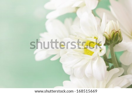 cute chamomile's flowers in pale green pastel tones