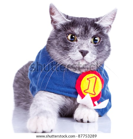 cute champion cat reaching to its paw for the camera, on white background - stock photo