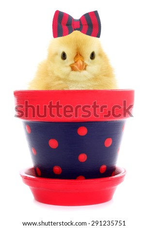 Cute chick with hair bow tie in lovely flowerpot - stock photo