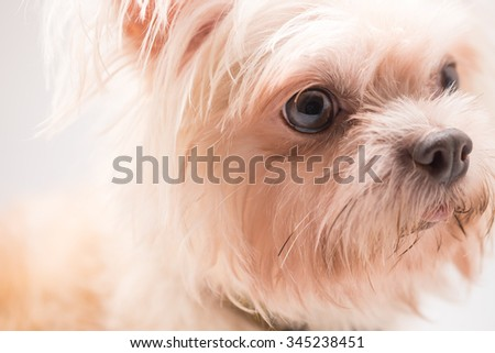 kid friendly dog breeds compare dog breeds loyal dog breeds dog breeds ...