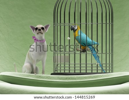 Cute chihuahua dog and parrot in steel cage on chair - stock photo