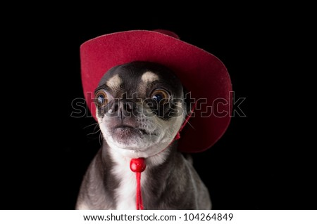 Cute chihuahua dressed in red cowboy hat isolated on black background - stock photo
