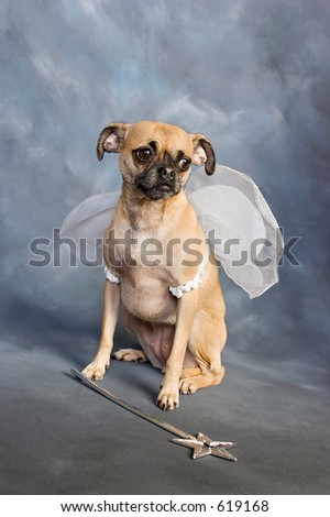 Cute Chihuahua Pug mix puppy dressed up in Halloween fairy costume. - stock photo
