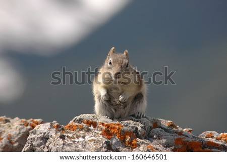cute chipmunk over the rock - stock photo