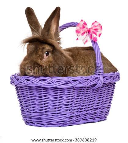 Cute chocolate colored Easter rabbit lying in a purple basket, isolated on white background