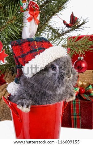 Cute Christmas grey mini lop baby bunny rabbit wearing hat under Christmas tree with gifts isolated on white background - stock photo