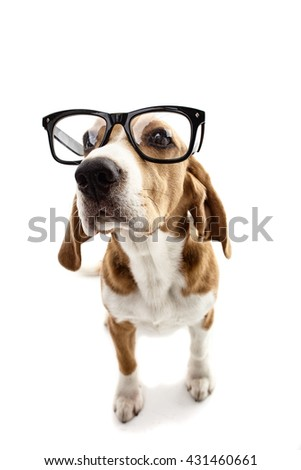 Cute clever puppy with large glasses - stock photo