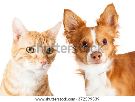 Cute closeup dog and cat together over white - stock photo