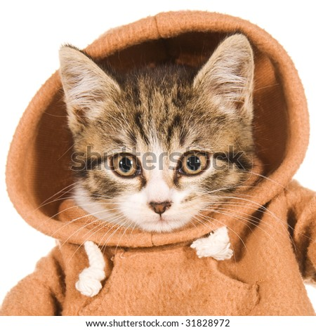 Cute clothed kitten on white background - stock photo