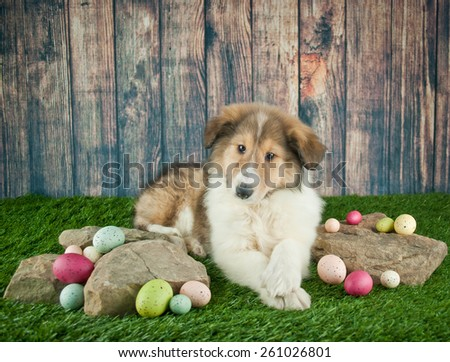 Cute Collie puppy laying in the grass with rocks and Easter eggs around her. - stock photo