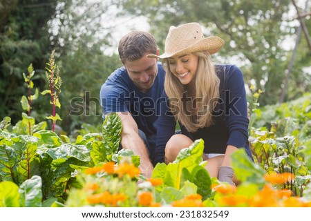 Cute couple gardening on sunny day at home in the garden - stock photo