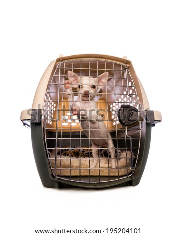 Cute cream color shorthaired Chihuahua puppy inside dog carrier looking out isolated on white background - stock photo