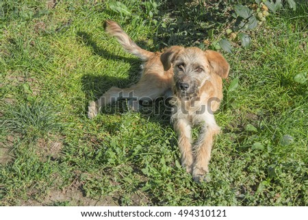 Cute cross-breed dog laying in the grass