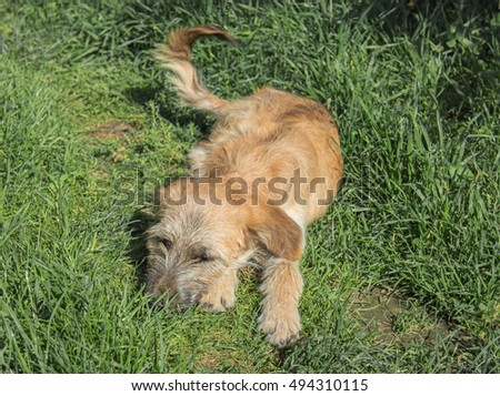 Cute cross-breed dog playing in the grass