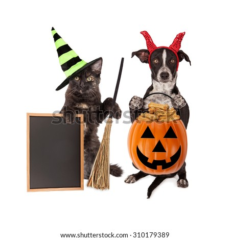 Cute crossbreed dog sitting up holding a pumpkin treat container next to a black cat sitting up wearing a witch hat holding a broom and black chalk board - stock photo