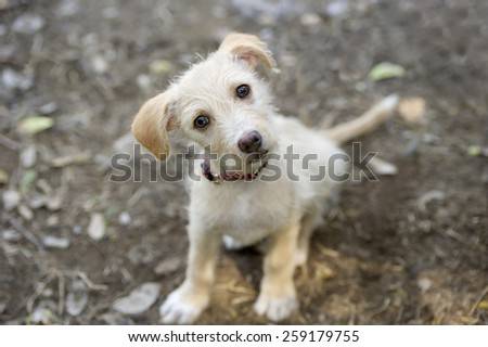 Cute curious puppy looking up. - stock photo
