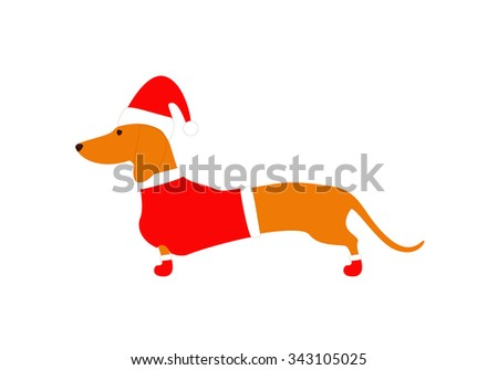 Cute dachshund wearing Christmas suit, red coat, hat and boots isolated on white background - stock photo