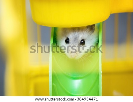 cute Djungarian hamster in a cage - stock photo