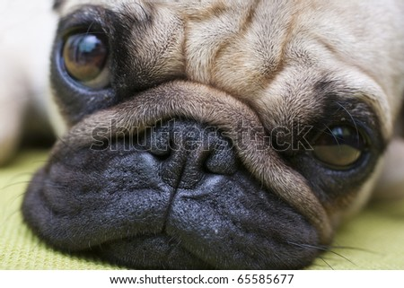 cute dog - stock photo