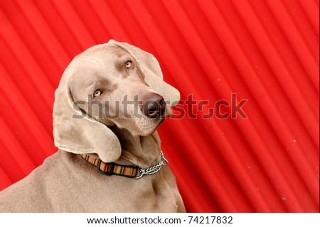 cute dog - stock photo