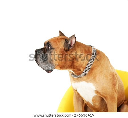 Cute dog and girl with sausage  isolated on white background - stock photo
