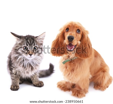 Cute dog and kitten isolated on white - stock photo