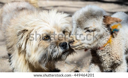 Cute dog and sheep kissing