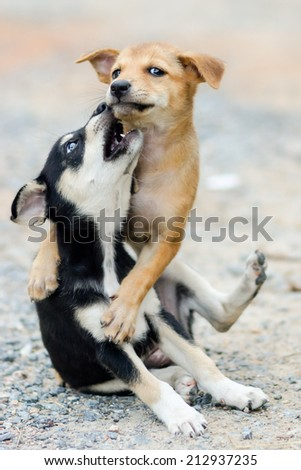 cute dog are looking - stock photo