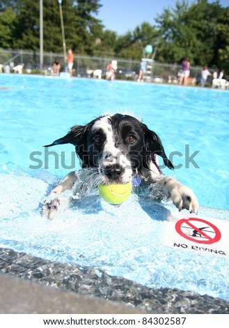cute dog at a swimming pool - stock photo