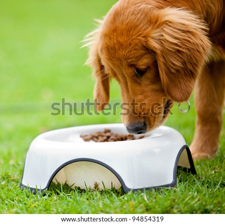 Cute dog at the park eating his food - stock photo