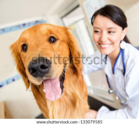 Cute dog at the vet getting a checkup - stock photo