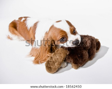 Cute dog chewing on stuffed animal - stock photo