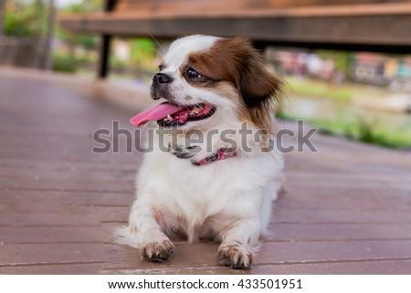 Cute dog,Cute puppy - stock photo